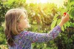 Little girl and cherry tree Stock Photography