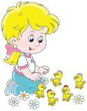 Little girl and chicks. Smiling child playing with her small funny chickens, a vector illustration in a cartoon style Royalty Free Stock Photo