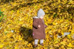 Little girl child baby in a coat and hat game makes its first steps in autumn park among fallen yellow maple leaves Royalty Free Stock Photos