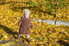 Little girl child baby in a coat and hat game makes its first steps in autumn park among fallen yellow maple leaves Stock Image