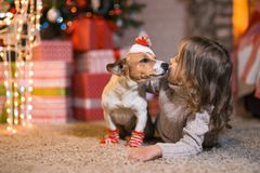 Little girl child at home at the fireplace with a dog Jack Russell Terrier and a New Year tree with gifts and luminous garlands c stock photo
