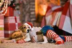 Little girl child at home at the fireplace with a dog Jack Russell Terrier and a New Year tree with gifts and luminous garlands c royalty free stock image