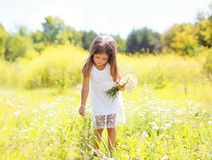 Little girl child on meadow picking chamomiles flowers. In sunny summer day Stock Image