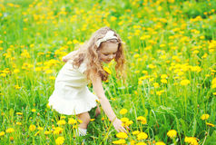 Little girl child in meadow picking yellow dandelion flowers. In sunny summer day stock images