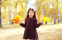 Little girl child with yellow maple leafs in autumn Stock Photography