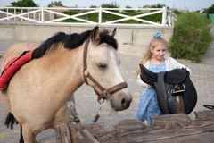 Little girl cleans and combs her pony and saddles him royalty free stock images