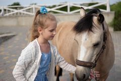 Little girl cleans and combs her pony and saddles him stock photography