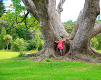 Little girl climbing a large tree. Royalty Free Stock Photo