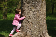 Little girl climbing tree in the park Stock Photography