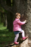 Little girl climbing tree in the park Stock Images