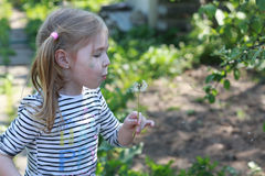 Little girl closeup portrait with dandelion Royalty Free Stock Image
