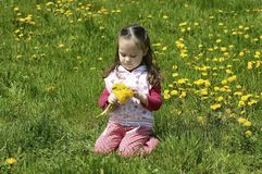 Little Girl Collect Flowers Royalty Free Stock Image