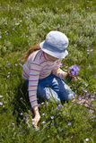 Little girl collect flowers Stock Photos