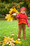 Little girl collect maple leafs In park in autumn royalty free stock image