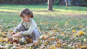 Little girl collecting autumn leaves stock footage