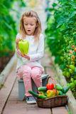 Little girl collecting crop cucumbers and tomatos in greenhouse. Portrait of kid with big sweet green peper in hands Royalty Free Stock Photo
