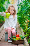 Little girl collecting crop cucumbers and tomatos in greenhouse. Portrait of kid with big sweet green peper in hands Royalty Free Stock Image