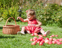Little girl collects the apples Royalty Free Stock Photography