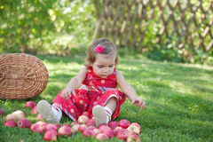 Little girl collects the apples Royalty Free Stock Images