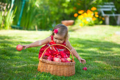 Little girl collects the apples Royalty Free Stock Photo