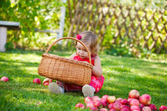 Little girl collects the apples Stock Image