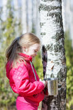 Little girl collects birch sap in the woods Stock Photo