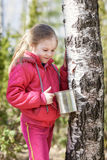 Little girl collects birch sap in woods Stock Photography