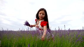 Little Girl Collects a Bunch of Lavender Flowers stock footage