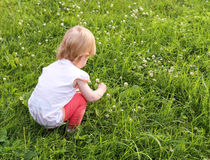 Little girl collects clover. Little girl collects clover on a green field Stock Photography