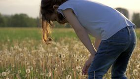 Little Girl collects dandelion flowers in the field. blossom time spring start a new life. child resting outdoors healthy lifestyl. Amusing little Girl collects stock video footage