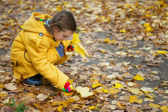 Little girl collects fallen maple Stock Photo