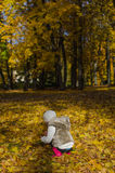 Little girl collects leaves Royalty Free Stock Photos