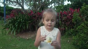 Little girl collects Plumeria flowers in tropical garden stock footage video stock video footage