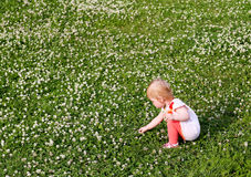 Little girl collects white clover. Royalty Free Stock Image