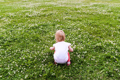 Little girl collects white clover. Little girl collects white clover on a green field Royalty Free Stock Image
