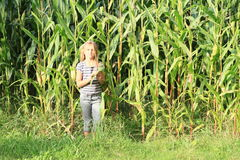 Little girl in corn field Royalty Free Stock Images
