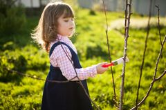 Whitewash of the tree trunk, little girl working in the garden Royalty Free Stock Photography