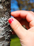 Little girl with cracked pink nail paint touching lichen Royalty Free Stock Image