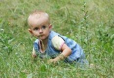 Little girl crawls in the grass Stock Images