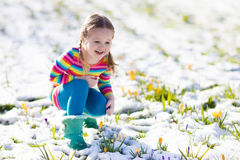 Little girl with crocus flowers under snow in spring. Cute little girl in colorful dress watching first spring crocus flowers under snow on sunny cold day. Child royalty free stock image