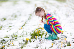 Little girl with crocus flowers under snow in spring royalty free stock images