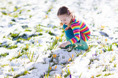 Little girl with crocus flowers under snow in spring stock photos