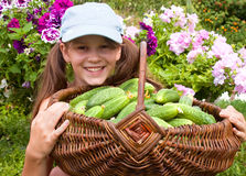 Little girl and cucumbers Stock Photography