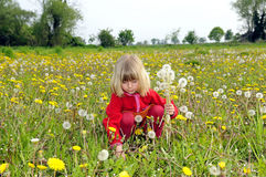 Little girl culls dandelions Royalty Free Stock Photography