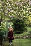 A little girl curled in a plaid dress under a blooming Apple tree Royalty Free Stock Photography