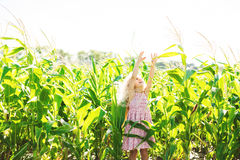 Little girl with curly blond hair and pink dress in a cornfield. Little girl with curly blond hair and pink dress in cornfield Stock Image