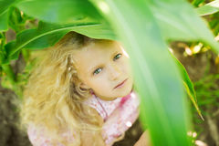 Little girl with curly blond hair and pink dress in a cornfield. Little girl with curly blond hair and pink dress in cornfield Stock Images