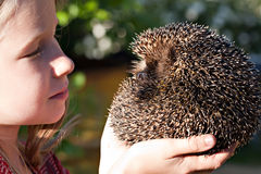 Little girl with cute European hedgehog Royalty Free Stock Photo