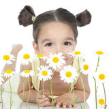 Little girl with daisies on white Royalty Free Stock Photo
