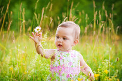 Little girl with the daisy Stock Photos